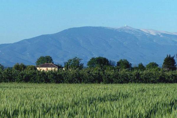 Vue sur le Mont-Ventoux