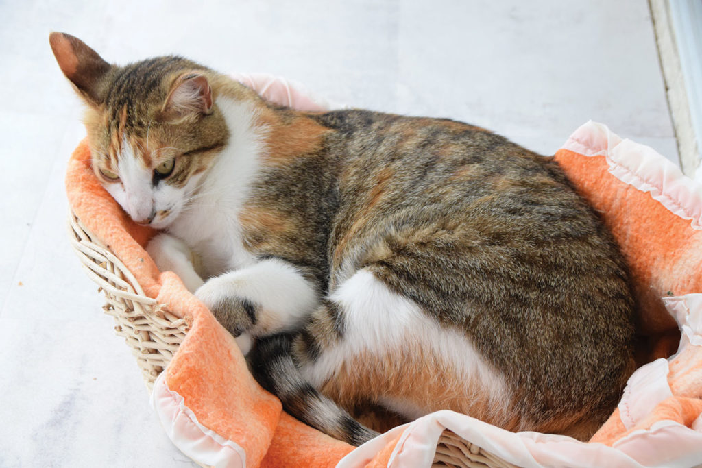 Kristal - chatte de la Maison des Invités